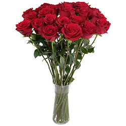 Red long stem roses