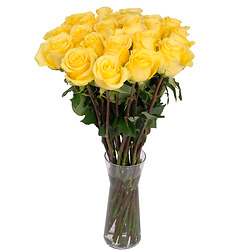 Yellow long stem roses
