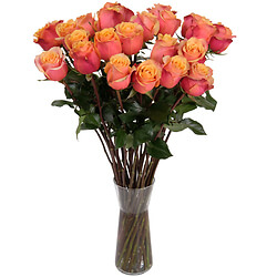 Orange long stem roses