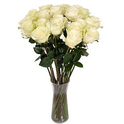 White long stem roses