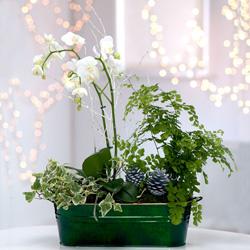 livraison de fleurs angleterre envoi de fleurs angleterre. Black Bedroom Furniture Sets. Home Design Ideas