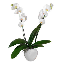 Potted white orchid