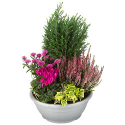 Arrangement of outdoor plants « Fuchsia »
