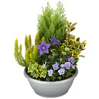 Arrangement of outdoor plants � Lila �