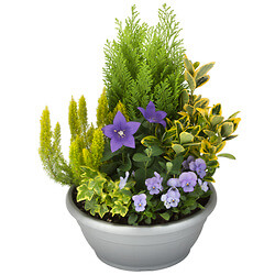 Arrangement of outdoor plants « Lila »