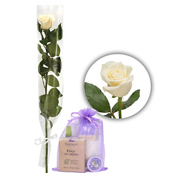 White rose with gift bag