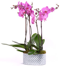 Bouquet Composition of pinks orchids