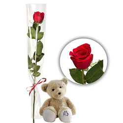 Rotfarbige Rose mit Teddybär