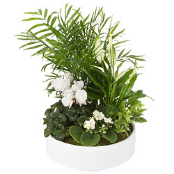 Bouquet Arrangement of indoor plants