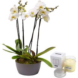 Composition d'orchidées et chocolats