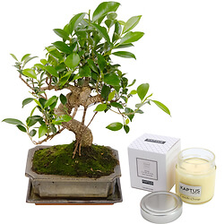 Bonsai with a scented candle