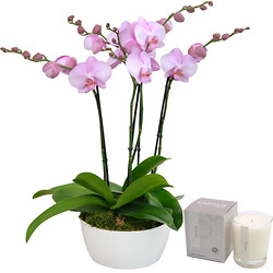 Composition of pinks orchids