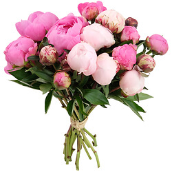 Adorable peonies