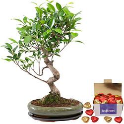 12 year old bonsai